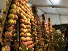 Äppel-gubar-utställn