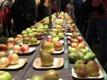 Äppelsorter-i-Utställn