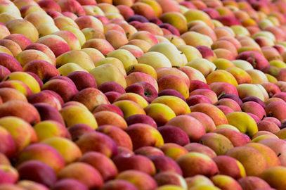 Inbjudan till fruktodlare i Skåne inför Årsstämma den 19 april