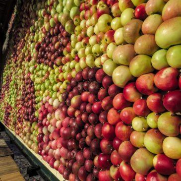 Äppeltavlan växer fram …
