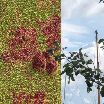 Äppeltavlan hänger kvar till och med söndag 20 oktober!
